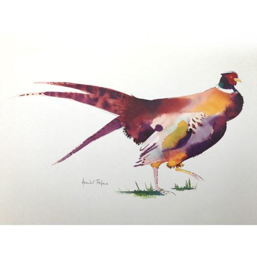 Pheasant (Purple Tail)